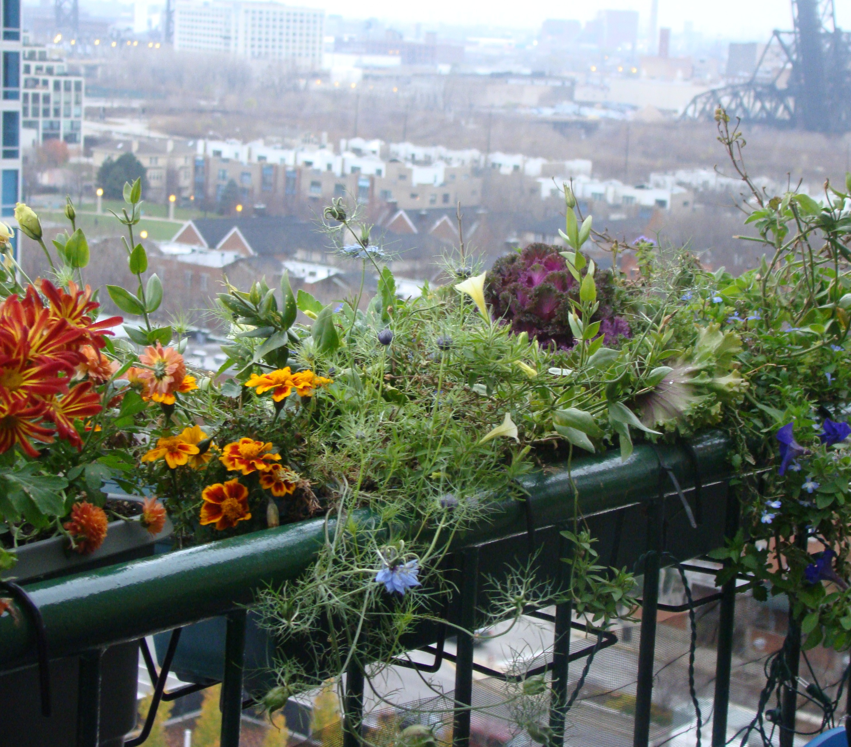 Garden Balconies: For Urban Balcony Gardener, There's No Denying The Coming