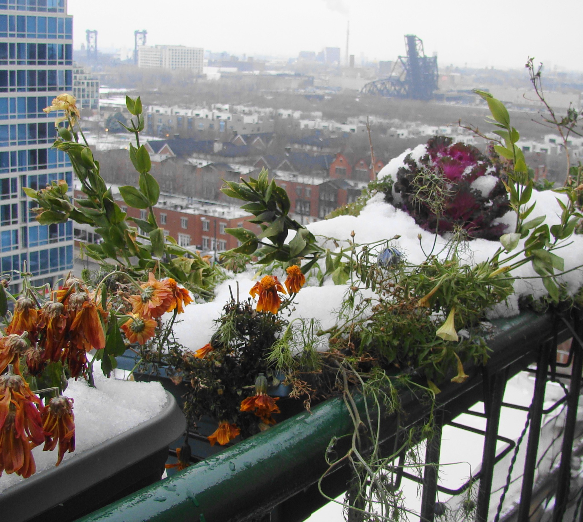 For urban balcony gardener there's no denying the coming